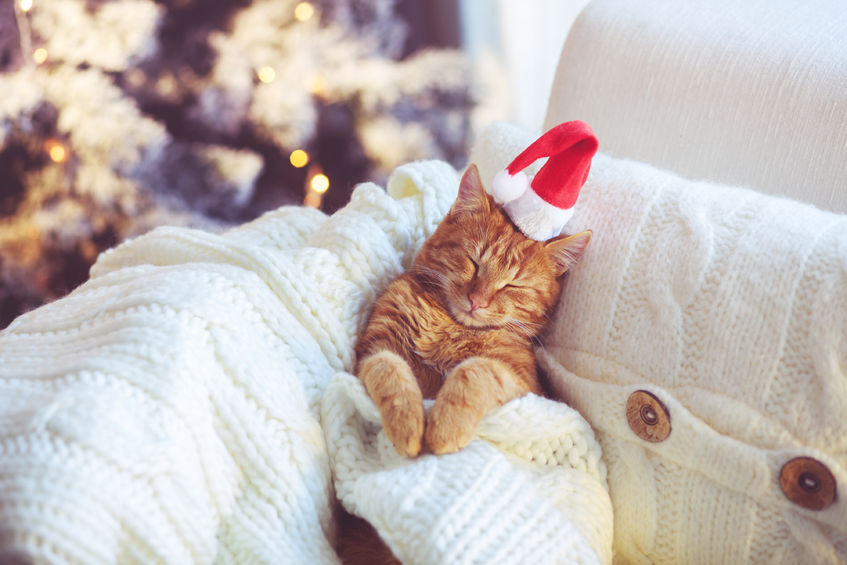 34218680 - lovable ginger cat wearing santa claus hat sleeping on chair under christmas tree at home