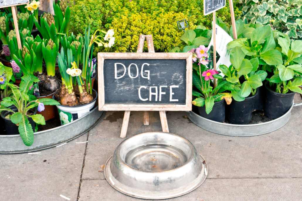 44151389 - a water bowl for dogs and a sign at a florist shop in the uk