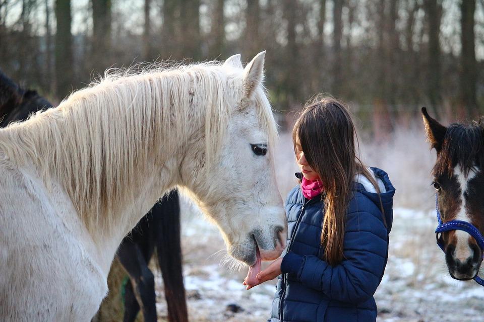 horse-1130159_960_720