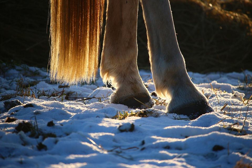 horse-1157932_960_720