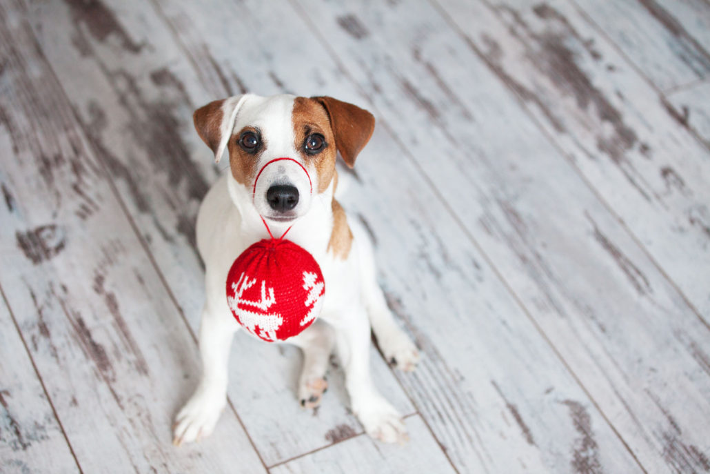 50347164 - dog at christmas decoration