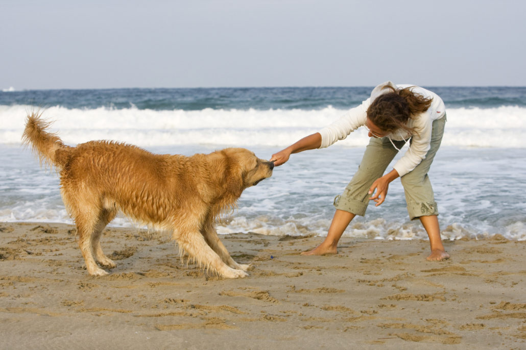 Young girl and her dog playing on the beach with stick