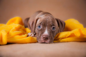 tax deductions and your pet
