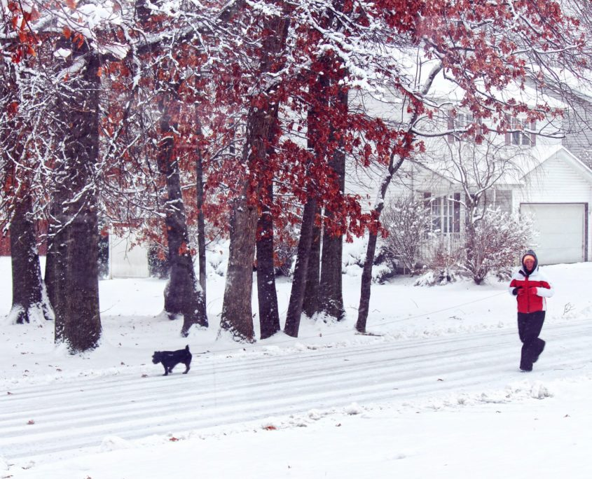 walking-dog-in-the-snow