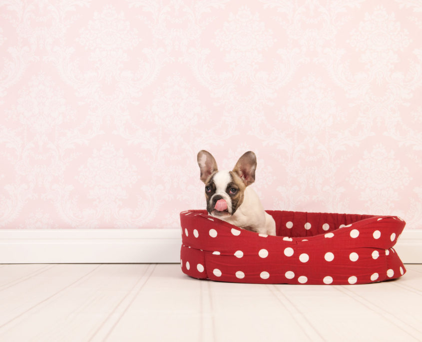 dog photography how to