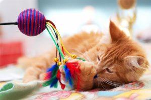 essential cat items
