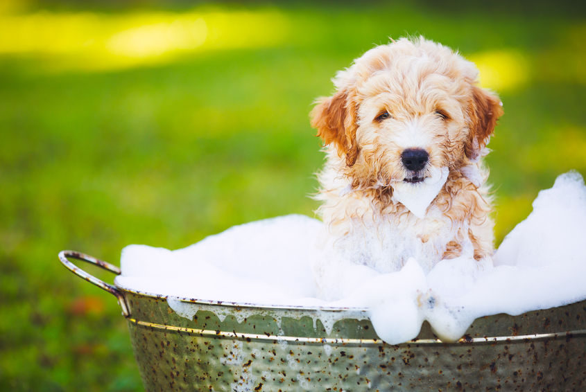 5 Ways To Make Your Dog Smell Better Healthypets Blog