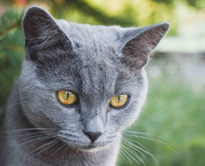 How To Keep A Cat Healthy Indoors