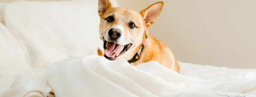 smiling dog on bed