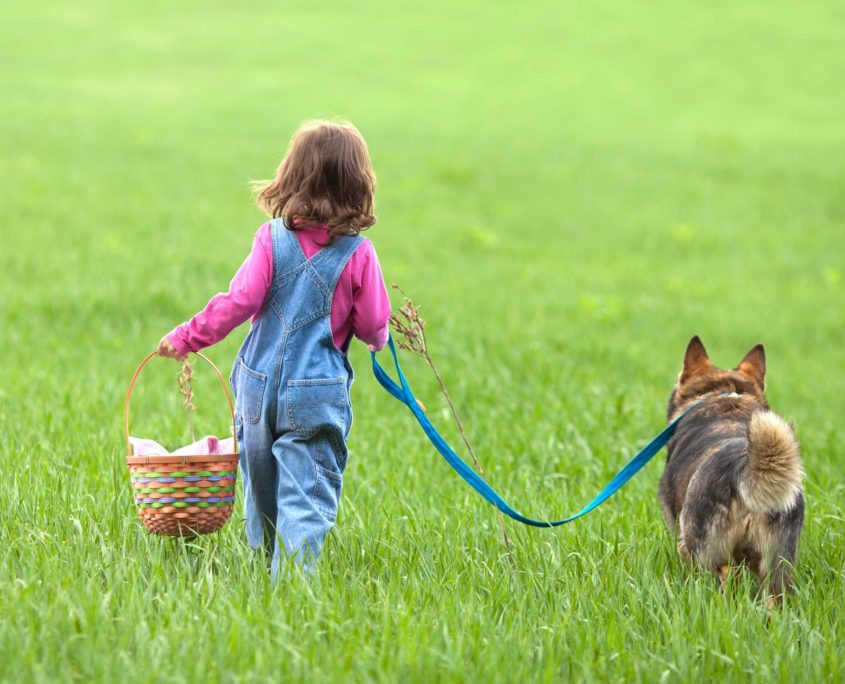 little girl with dog walking on the field back to camera