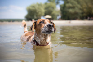 cute mixed breed dog swimming on vacation