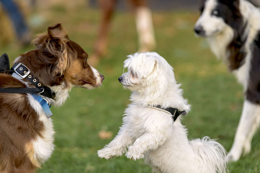 dogs who meet in a park
