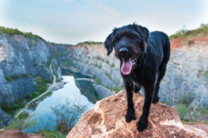 beautiful mutt black dog on mountain rock with a flooded quarry.