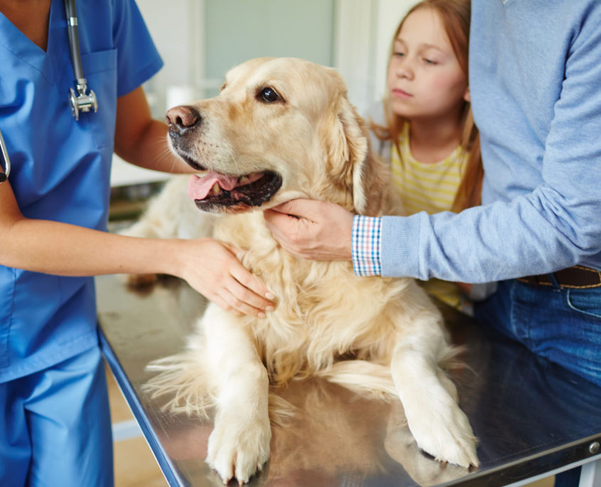 owners bringing their pet dog to veterinarian