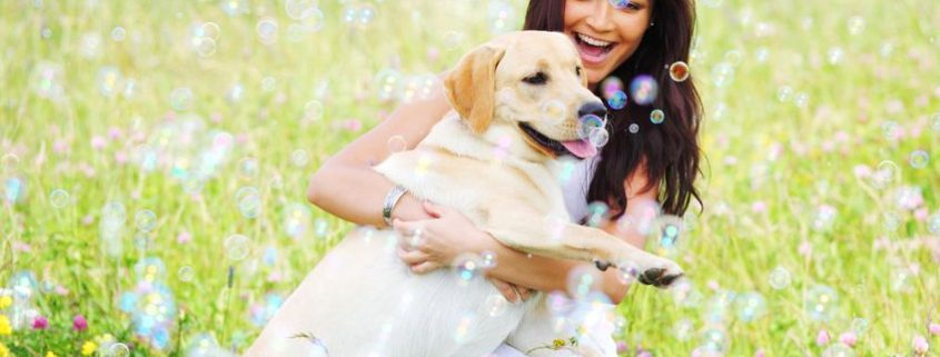 woman and her labrador dog in green grass