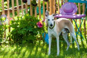 dog in a idyllic garden