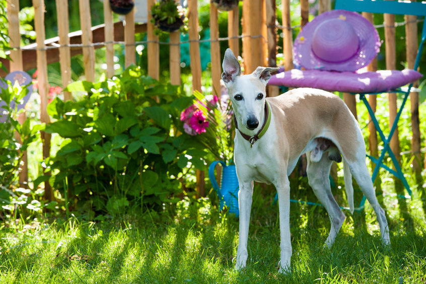dog in a idyllic garden