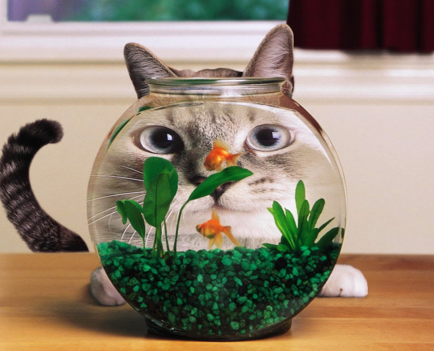 Prime How To Keep Your Cat Away From The Aquarium Healthypets Blog Download Free Architecture Designs Rallybritishbridgeorg