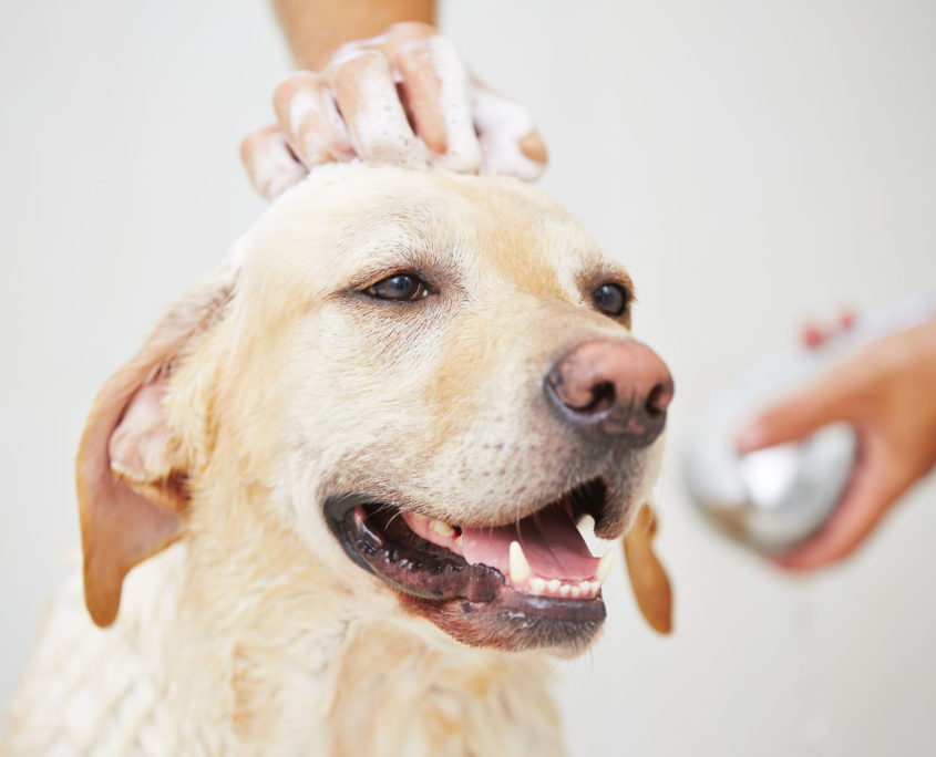 5 simple ways to make your dog smell better healthypets blog