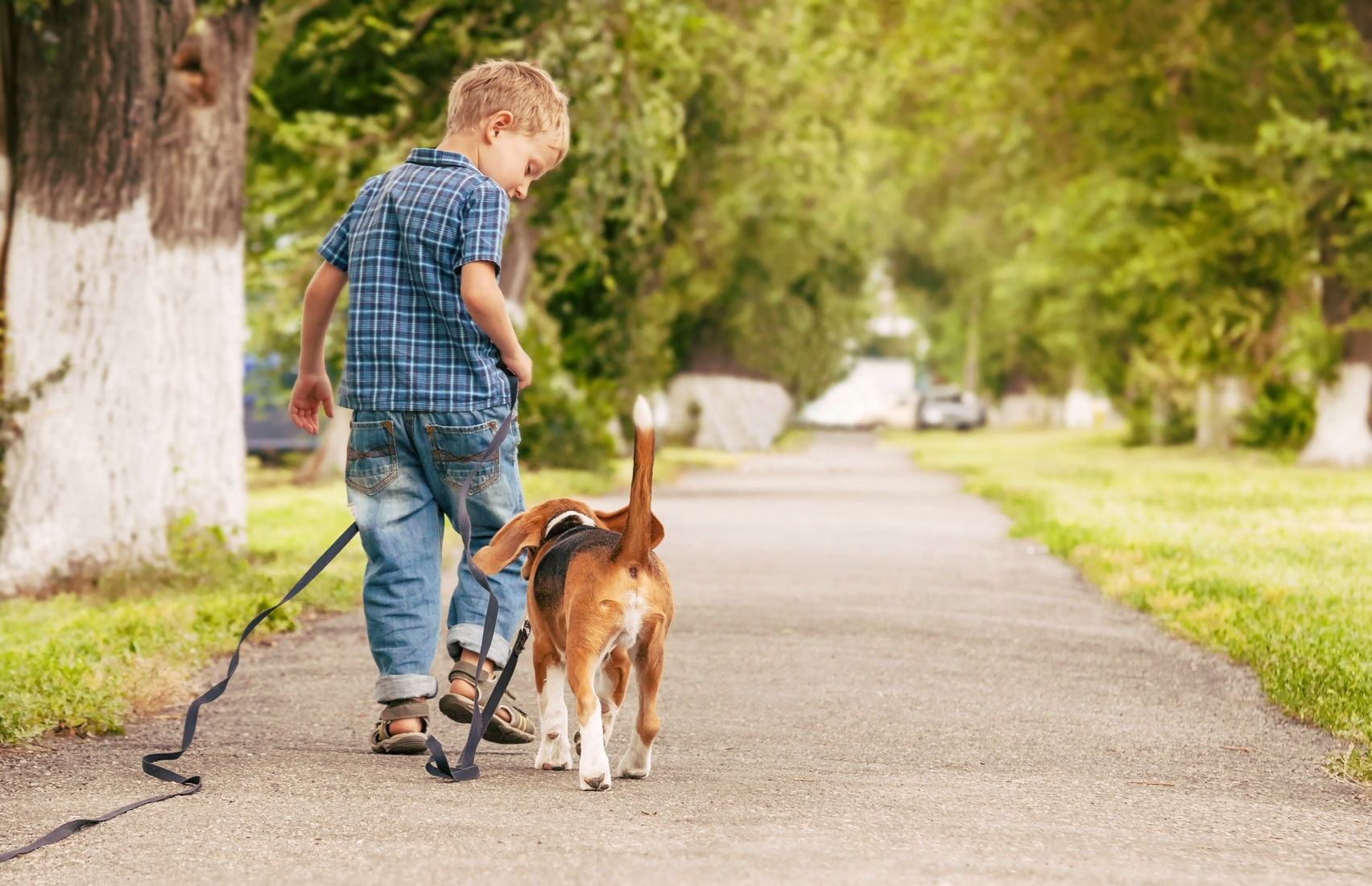 How To Make Your Dog Walk With You