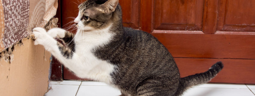 6 Ways To Prevent Your Cat From Scratching The Furniture