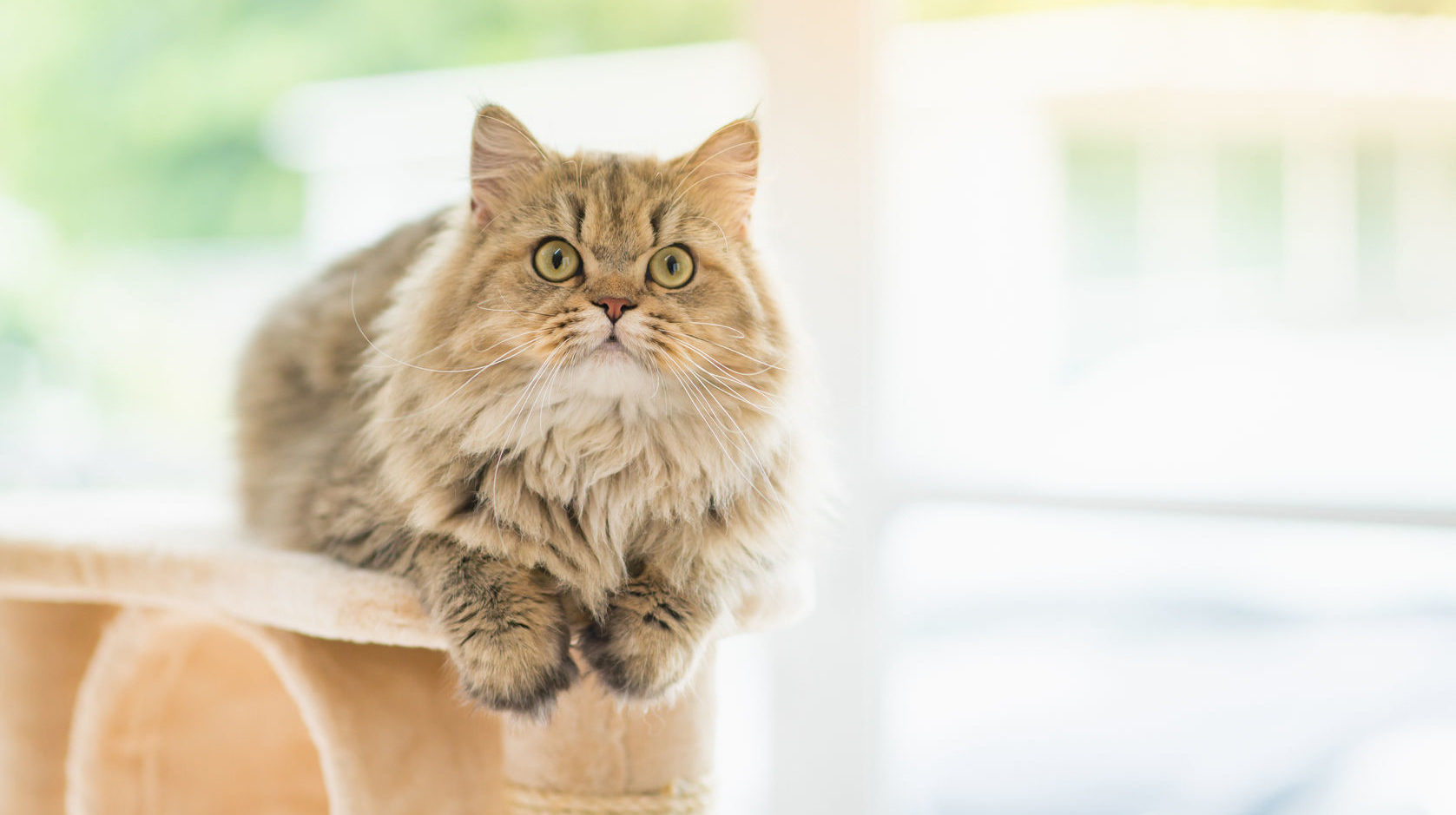 Senile Cats: Why My Cat Is Appearing Bizarre And What To Do 3