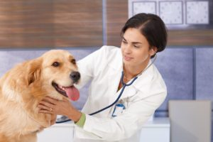 young female vet examining dog by stethoscope at pets' clinic.