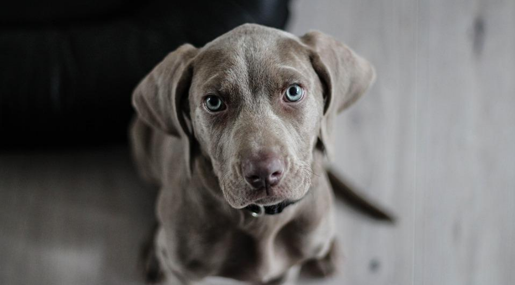 6 Special Dog Senses That Could Save Your Life | HealthyPets