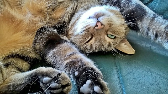 Senile Cats: Why My Cat Is Appearing Bizarre And What To Do 5