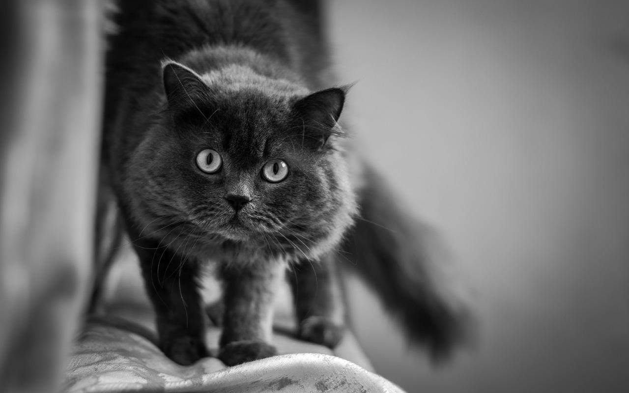 Senile Cats: Why My Cat Is Appearing Bizarre And What To Do 1